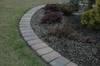 Nostalit melanż 8 cm na trawniku